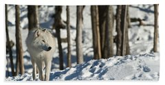 Beach Towel featuring the photograph Winter Arctic Wolf by Wolves Only