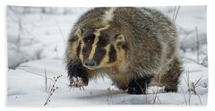 Beach Sheet featuring the photograph Winter Badger by Jack Bell