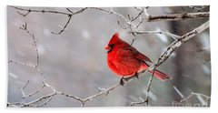 Winter Cardinal Beach Sheet by Debbie Green
