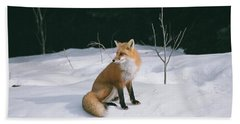 Winter Fox Beach Towel by David Porteus