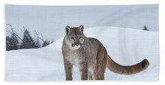 Winter Mountain Lion  Beach Sheet