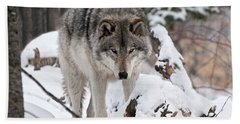 Beach Towel featuring the photograph Winter Timber Wolf by Wolves Only