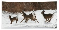 White Tailed Deer Winter Travel Beach Sheet