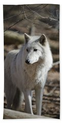 Timber Grey Wolf Beach Towel