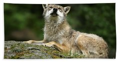 Wolf Resting On Rock Beach Towel
