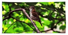 Wood Thrush Singing Beach Sheet by Chris Flees