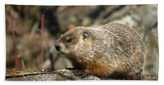 Woodchuck Beach Towel by James Peterson