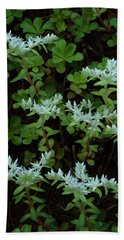 Beach Towel featuring the photograph Woodland Stonecrop by Daniel Reed