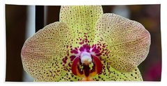 Yellow And Maroon Orchid Beach Sheet