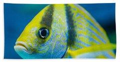 Atlantic Porkfish Beach Towel
