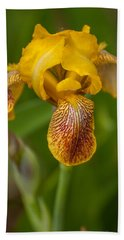 Yellow Bearded Iris Beach Sheet