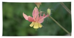 Yellow Columbine Beach Sheet
