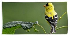 Beach Towel featuring the photograph Yellow Finch by Nava Thompson