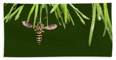 Beach Towel featuring the photograph Yellow Jacket At Pine Needles With Raindrops by Daniel Reed