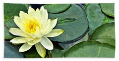 Yellow Lotus - Botanical Art By Sharon Cummings Beach Towel