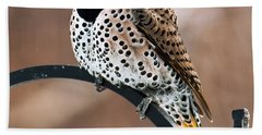 Yellow-shafted Northern Flicker Beach Towel