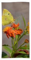 Yellow Sulphur Butterfly Beach Towel by Debra Martz