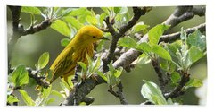 Yellow Warbler In Pear Tree Beach Towel
