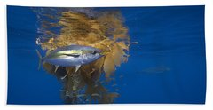 Beach Towel featuring the photograph Yellowfin Tuna And Kelp Nine-mile Bank by Richard Herrmann