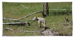 Yellowstone Coyote Beach Towel