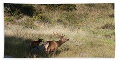Young Bull Elk Beach Sheet