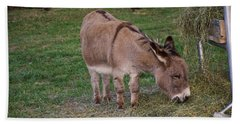 Young Donkey Eating Beach Sheet