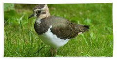 Young Lapwing Beach Towel