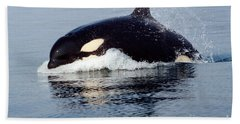 Beach Towel featuring the photograph Young Orca Off The San Juan Islands Washington 1986 by California Views Mr Pat Hathaway Archives