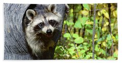 Young Raccoon Procyon Lotor Looking Beach Towel