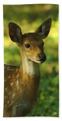 Young Spotted Deer Beach Towel by Jacqi Elmslie