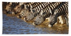 Zebras Drinking Beach Towel