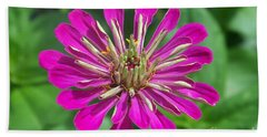 Beach Towel featuring the photograph Zinnia Opening by Eunice Miller