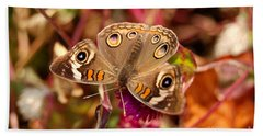 Buckeye Butterfly  Beach Towel by Eva Kaufman