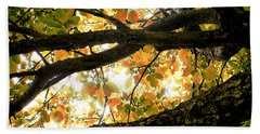 Beneath The Autumn Wolf River Apple Tree Beach Towel by Angie Rea