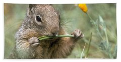 Beach Sheet featuring the photograph California Ground Squirrel by Doug Herr