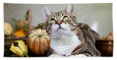 Cat And Pumpkins Beach Sheet by Nailia Schwarz