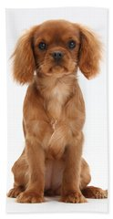 Cavalier King Charles Spaniel Puppy Beach Towel
