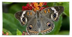 Common Buckeye Butterfly Beach Towel by Betty LaRue