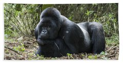 Mountain Gorilla Silverback Resting Beach Towel