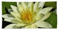 Nymphaea  Beach Towel