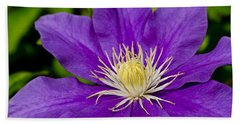Purple Clematis Flower Beach Towel