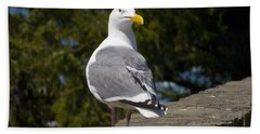 Beach Towel featuring the photograph Seagull by David Gleeson