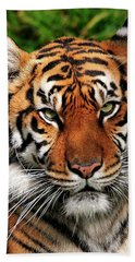 Sumatran Tiger Portrait Beach Sheet