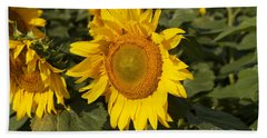 Beach Towel featuring the photograph Sun Flower by William Norton