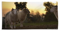 The Lamb Beach Towel