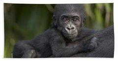 Western Lowland Gorilla Gorilla Gorilla Beach Towel