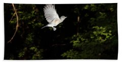 Tufted Titmouse In Flight Beach Sheet by Ted Kinsman