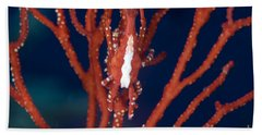 Bright Red Crab On Fan Coral, Papua New Beach Towel