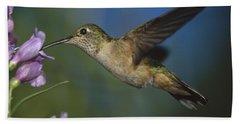 Broad Tailed Hummingbird Feeding Beach Towel
