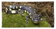 California Tiger Salamander  Monterey Beach Towel